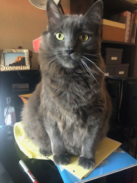 Francie-Chicory-Sitting-on-Notes-